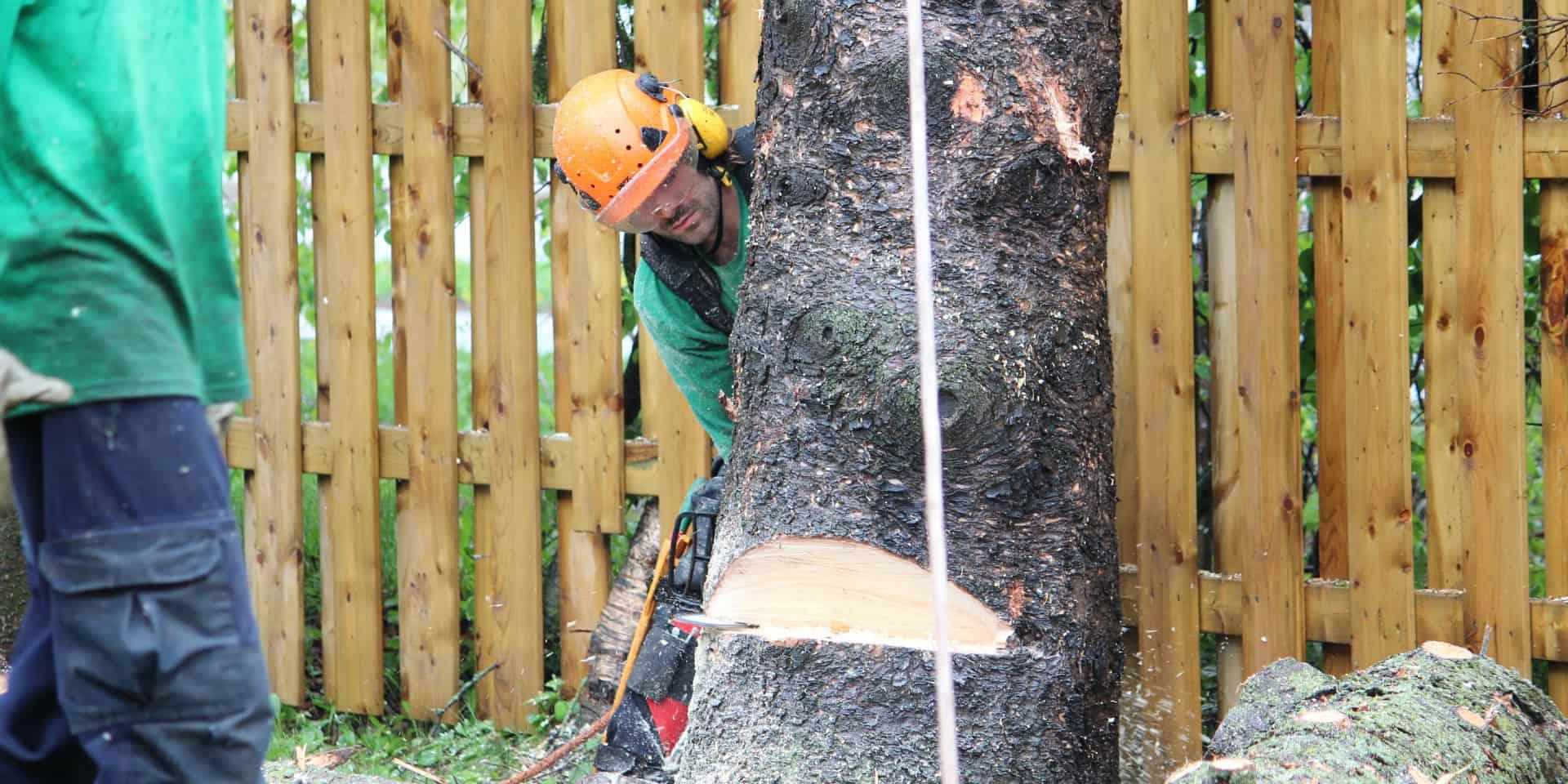 Abattage d'arbre au Québec