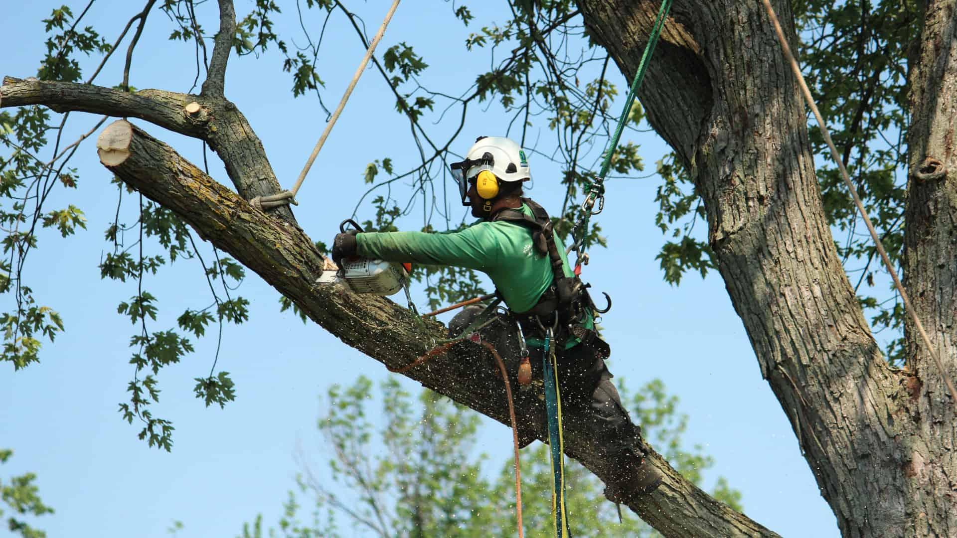 Émondage d'arbre au Québec